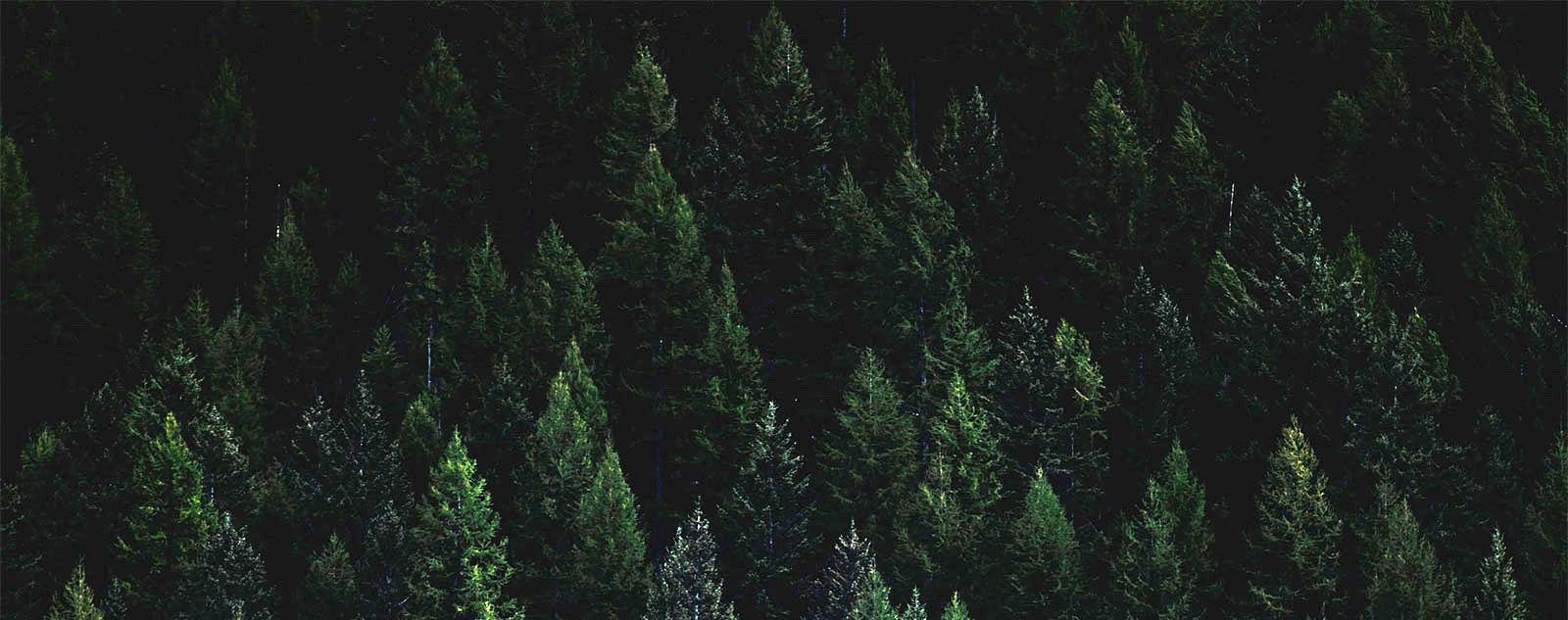 foresta, serbatoio di cabonio